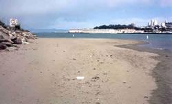 San Francisco Marina Model Study